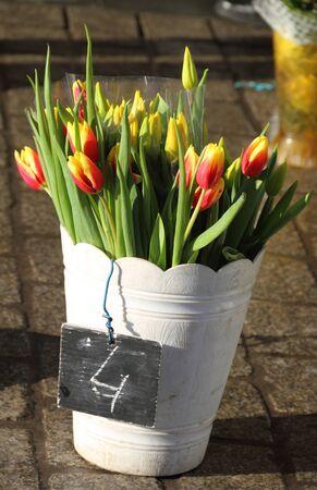 central square: Tulipani in vendita sulla piazza centrale di Cracovia Archivio Fotografico
