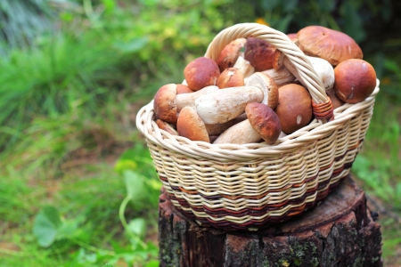 Basket with ceps photo