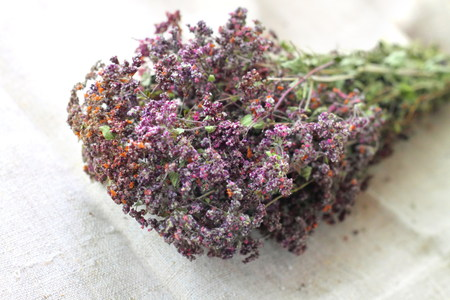 wild marjoram: Dried Origanum Stock Photo
