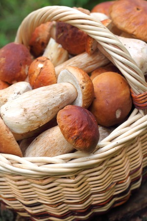 Basket with forest mushrooms photo