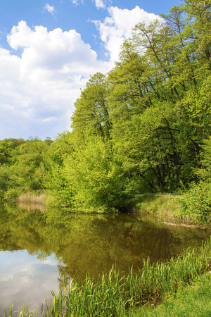 Deciduous forest on the lakeside in the spring photo