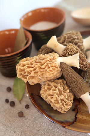Fresh morel mushrooms on a plate
