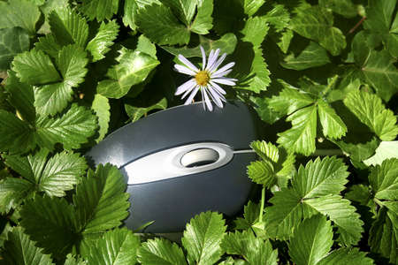 The computer mouse in a green grass. Has left to breathe by a nature   Stock Photo