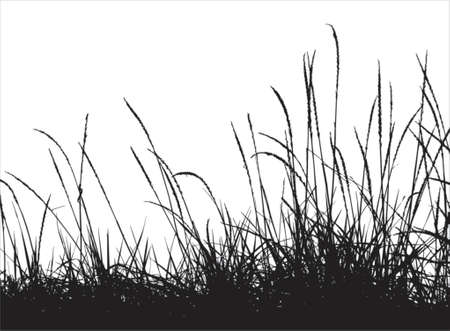 landscaped: Grass vector silhouette