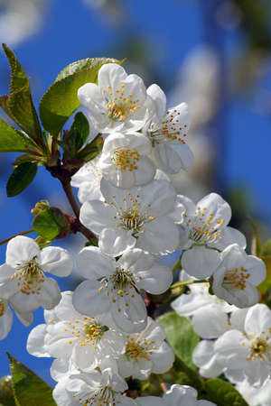 The nature is pleased! In the spring all blossoms! Ideally for your use  photo