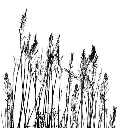 real grass  silhouette / vector Vettoriali