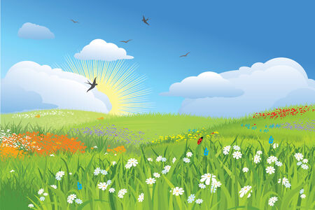 Colorfull meadow / flower and grass /  blue sky / vector Vettoriali