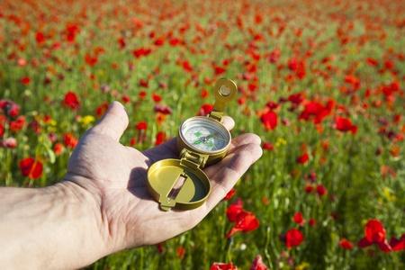手のコンパス発見美しい自然の中で日赤いケシ 写真素材