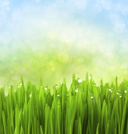 Hierba verde con gotas de agua en el Fondo Abstracto Bokeh Foto de archivo