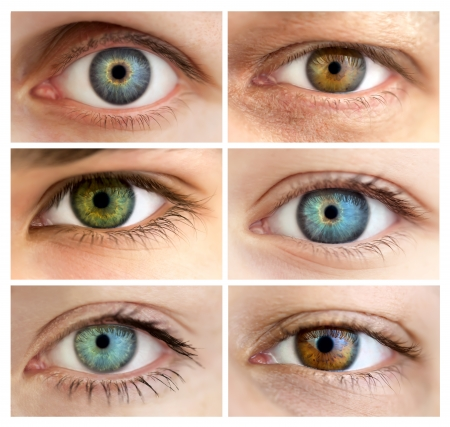 Set of 6 Real Different Open Eyes  Huge Size  Macro Stock Photo