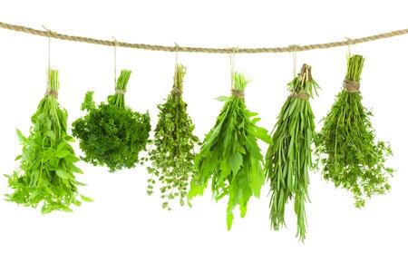 Set van Spice kruiden geïsoleerd op witte achtergrond trossen van tijm, basilicum, oregano, peterselie, salie en rozemarijn zijn opknoping en drogen