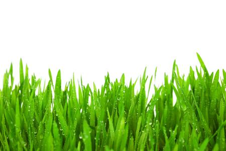 Herbe verte fraîche avec gouttes de rosée isolé sur blanc avec espace de copie Banque d'images - 25931716