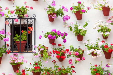 Beautiful Window and Wall Decorated Colorful Flowers - Old European Town, Cordoba, Spain Stock Photo