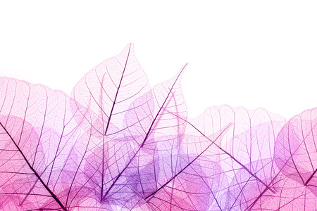 Pink and Purple Border of transparent Leaves - isolated on white background