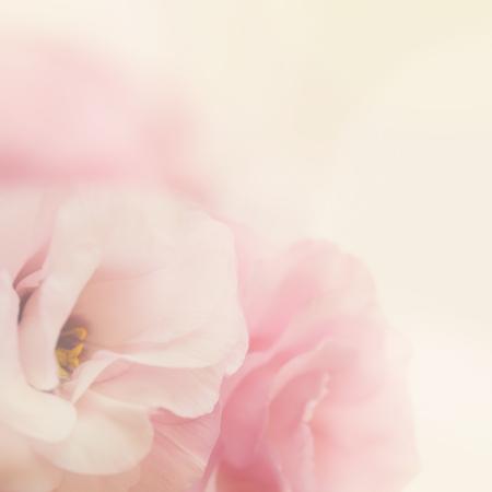 빈티지 부드러운 핑크 꽃 배경 - 매크로