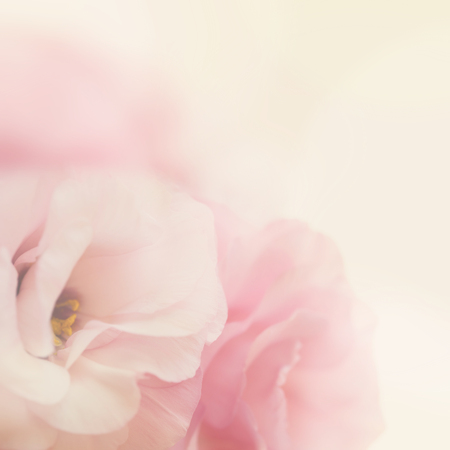 Vintage gentle pink flowers background- macro