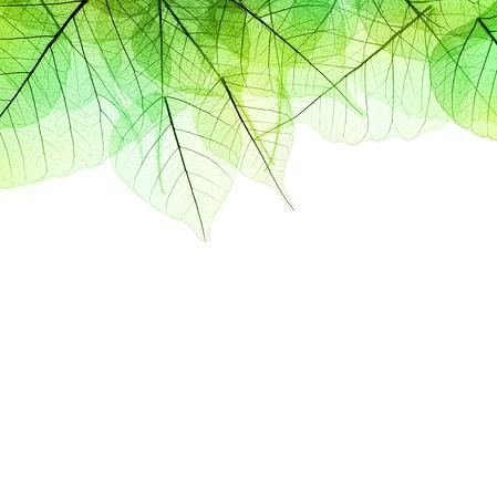 녹색 잎 - 흰색 배경에 고립의 테두리