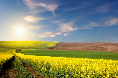 계곡, 태양과 푸른 하늘, 농촌 봄 풍경이 내려다 보이는 노란색, 녹색, 갈색 필드와 지상 도로