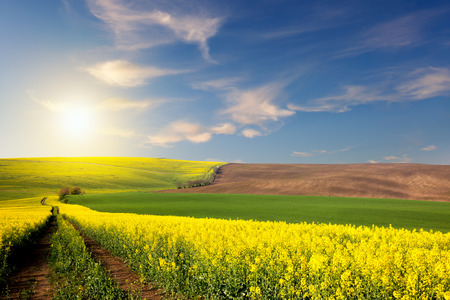 Yellow, green, brown fields and ground road overlooking a valley, sun and blue sky, rural spring landscape