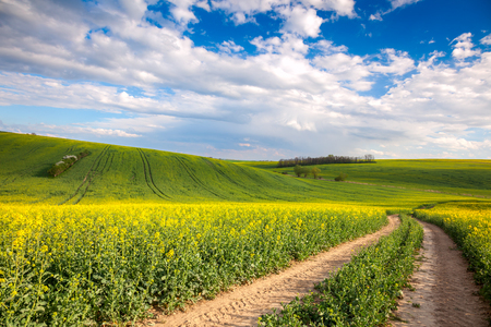 Colorful Valle - Yellow flowering fields and ground road overlooking blye sky, spring