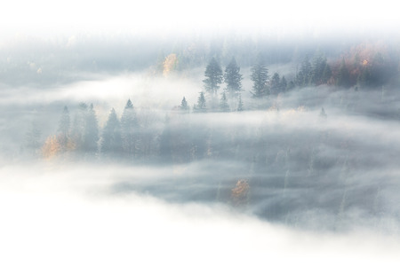 Autumn season, wild forest  in the sunrise misty fog and clouds