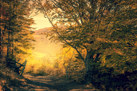 Magic way in Autumn Forest, yellow trees, fall season landscape, horizontal