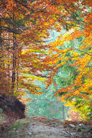 Colorful Autumn Fall Leaves in forest landscape and footpath, vertical
