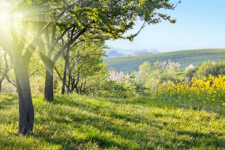 朝 - 花木、緑の芝生と美しい渓谷のパノラマ、春に日当たりの良い田園風景の景観 写真素材