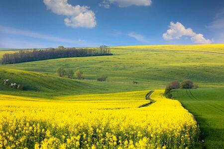 Paysage panoramique des collines colorées jaune-vert avec la route de terre, ciel bleu et nuages