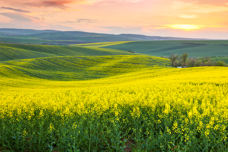 Spring fresh landscape of colorful fields,  sunrise sky and beautiful hills valley 스톡 콘텐츠