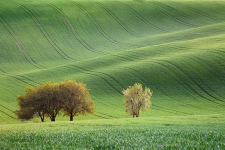 Verbazingwekkende golven van heuvels en bloesembomen - groen landschap voor achtergronden of wallpapers