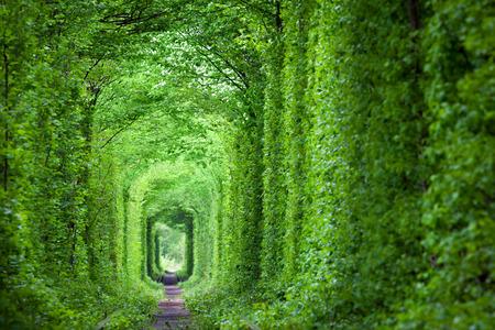 自然 - 愛実トンネル、緑の木々 と鉄道、ウクライナのだろうか。