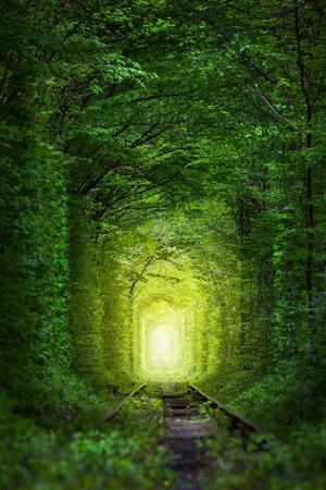 幻想的な木の妖精光遠く、魔法の背景と愛のトンネル