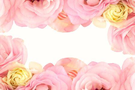Gentle rosa fiori di frontiera - isolato su sfondo bianco