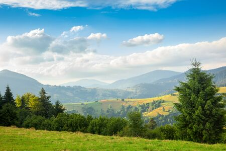 Summer journée ensoleillée est dans le paysage de montagne. Carpates, Ukraine, Europe