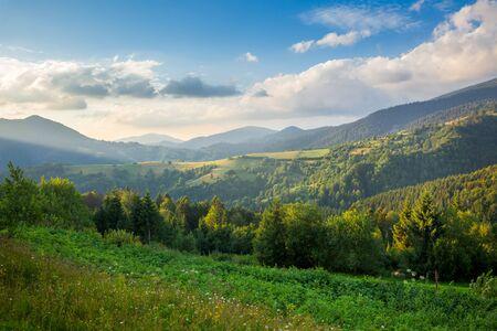 Beautiful Mountain Valley in summer, Carpathian, Ukraine, Europe