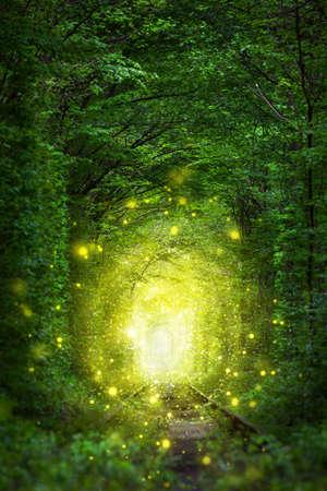 Fantastic Trees Scene- Tunnel of Love with fairy light afar, magic background Foto de archivo