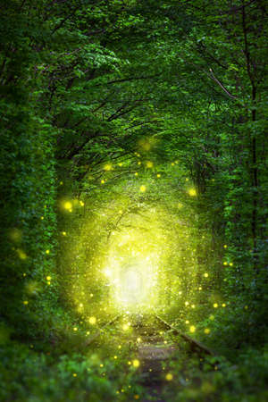 Fantastic Trees Scene- Tunnel of Love with fairy light afar, magic background Stock Photo