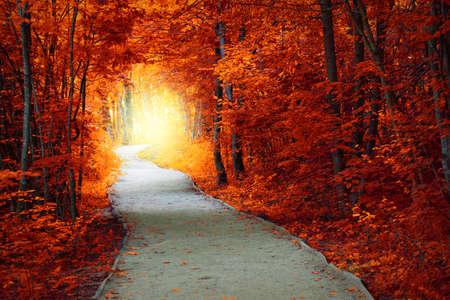 Fantastyczna Jesienią lasu z drogi i magicznym świetle, spadek bajkowy krajobraz