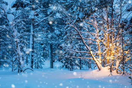 Christmas tree with warm garland lights and  snow-flakes  in winter forest, nobody. Beautiful northern winter landscape