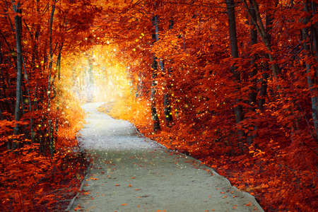 Magical Autumn forest with path and fantastic glow, fairytale landscape