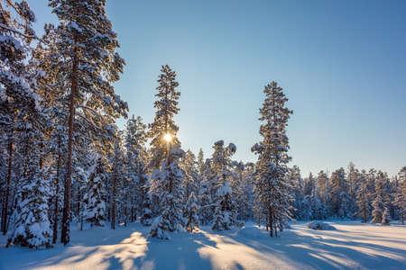 Hiver Incroyable Ensoleille Paysage Fond D Ecran Avec Le Soleil Et Les Arbres Couverts De Neige Belle Nature Du Nord Banque D Images Et Photos Libres De Droits Image 67951500