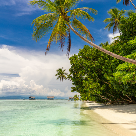 Paradise tropical beach. Nobody. View of paradise tropical beach with coconut palms. Holiday and vacation concept. Tropical island, ocean and blue sky