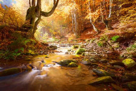 Autumn Landscape. Small mountains river in yellow trees forest, colors of fall nature, big size Stock fotó
