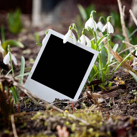 Instant film frame and a few snowdrops Stock Photo