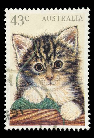 AUSTRALIA - CIRCA 1991: A 43 cent stamp printed in Australia shows image of a kitten, circa 1991  photo
