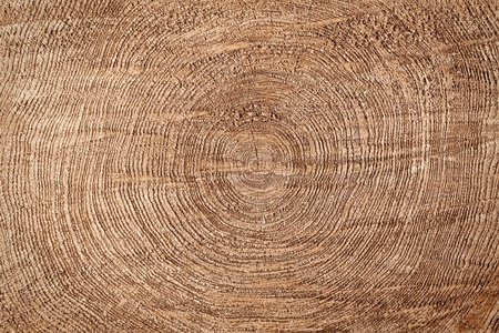Slice of wood timber natural background Imagens - 13188985