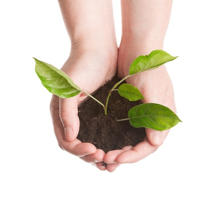 Plant in a hands isolated on white background