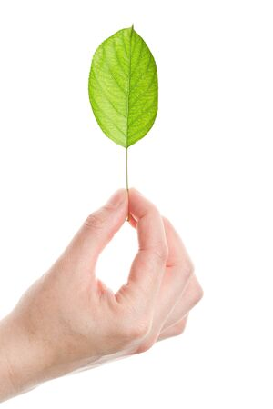 Green leaf in hand isolated on white background Stock Photo - 13908808