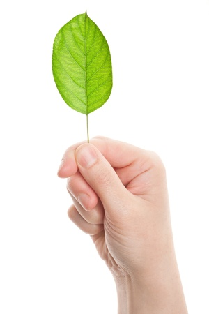 Green leaf in hand isolated on white background Stock Photo - 13984054